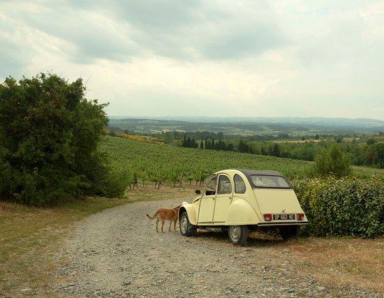 Villemoustaussou, ฝรั่งเศส: View over the Merlot