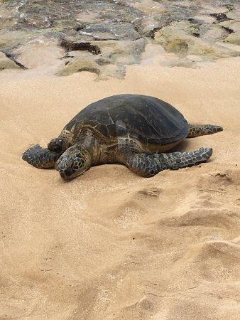 Laniakea Beach: photo0.jpg