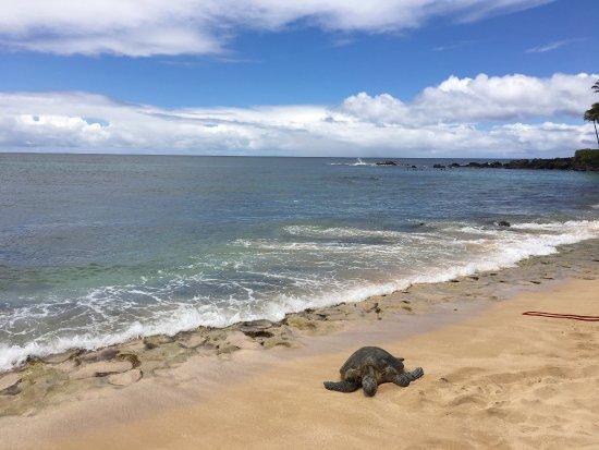 Laniakea Beach: photo1.jpg
