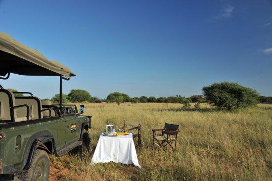 Modimolle (Nylstroom), South Africa: Bushveldt picnic