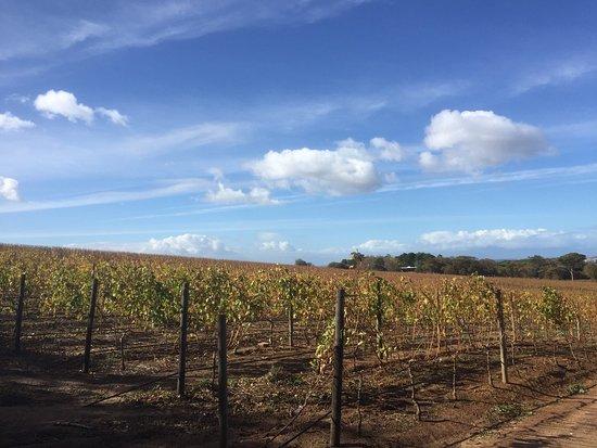 Constantia, جنوب أفريقيا: photo4.jpg