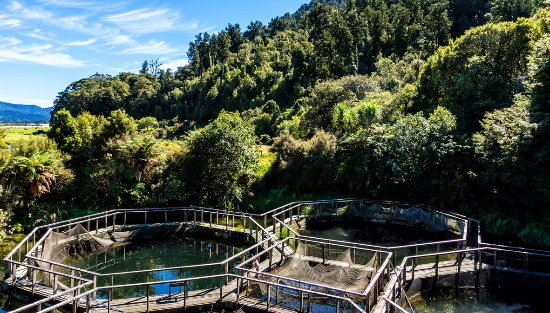 Westland National Park (Te Wahipounamu), New Zealand: Paringa Salmon Farm