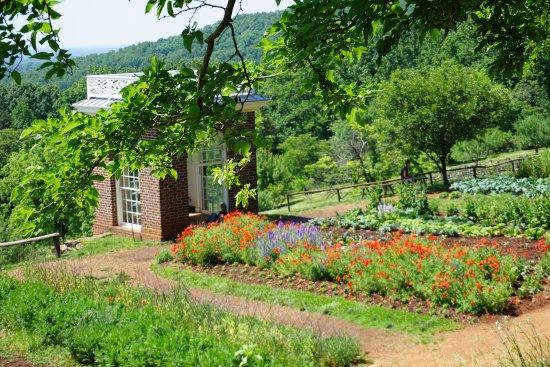 Thomas Jeffersonu0027s Monticello: Experimental Gardens
