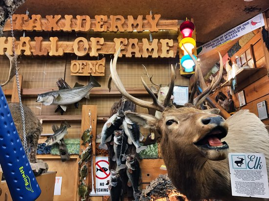 Creation Museum Southern Pines Nc Top Tips Before You