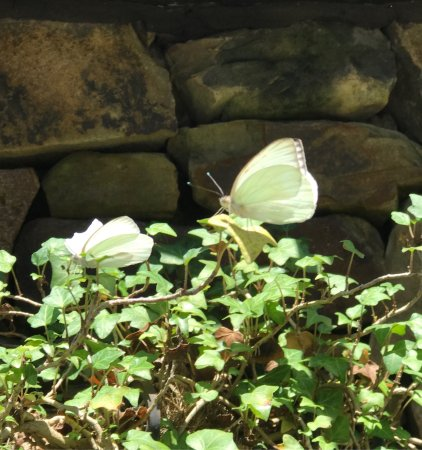 Huntsville Botanical Garden: photo9.jpg