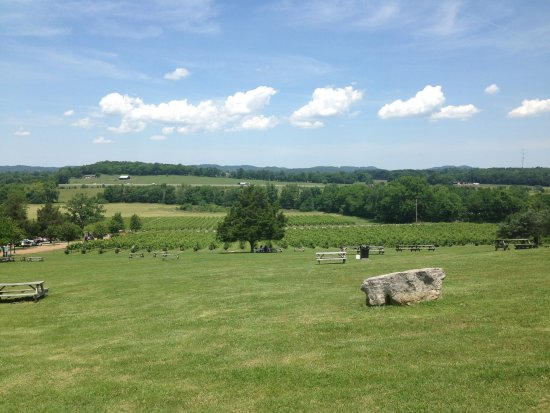 Arrington, TN: View from new the tasting room
