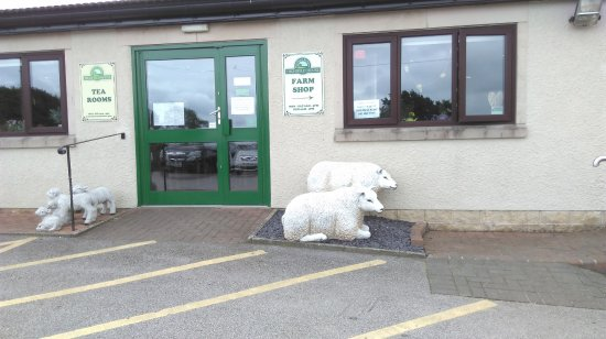Stonedge, UK: Don't feed the sheep