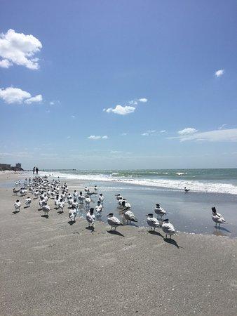 Redington Beach, FL: Strandspaziergang 5 min vom Hotel
