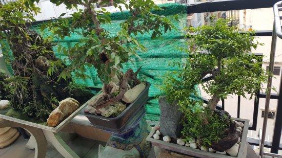 Kim Hotel: Bonsai plants on rooftop