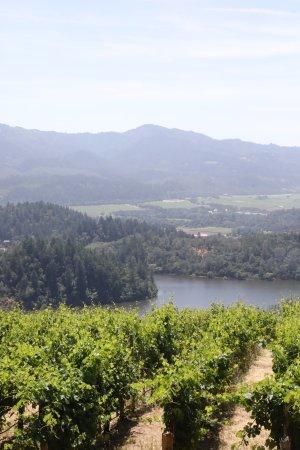 Viader Winery Tour