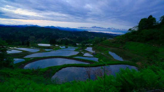 ‪Yamakoshi Rice Terraces‬