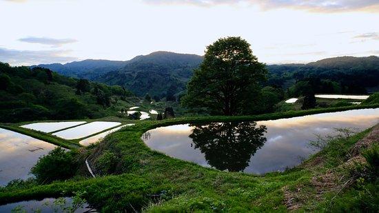 Yamakoshi Rice Terraces
