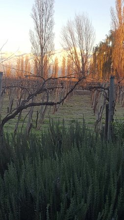 Cavas Wine Lodge: Paraíso