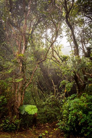 Pura Vida Retreat & Spa: part of the cloud forest in Poas