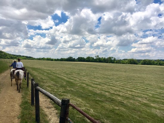 Laurelville, OH: The Spotted Horse Ranch