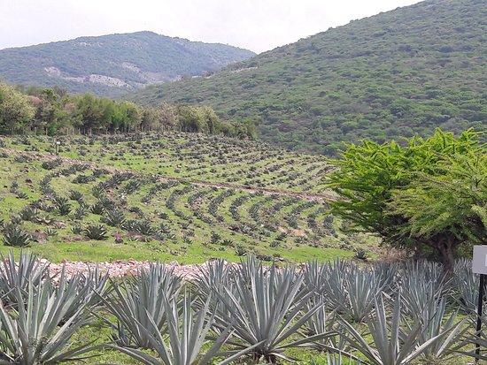 Morelos, México: photo4.jpg