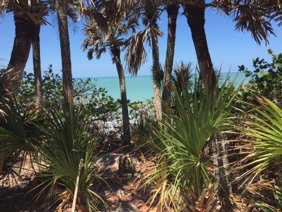 Manasota Beach Club : The beach, seen through verdant grounds