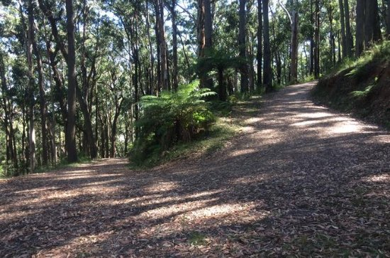 Half-Day Mount Dandenong Trail...