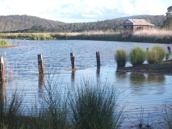 Pambula, Австралия: Panboola Wetlands, direct access