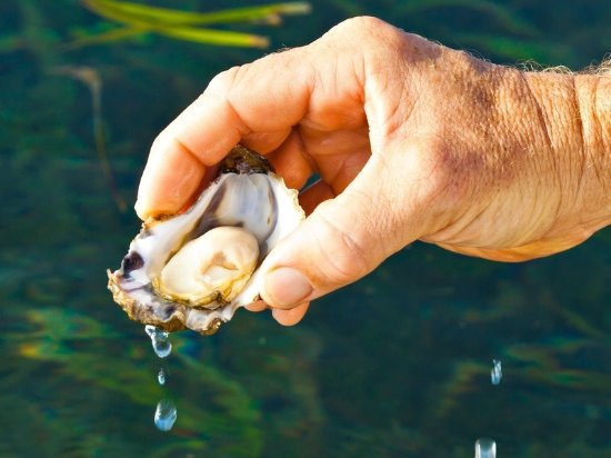 Idlewilde Town & Country Motor Inn: Pambula Oysters