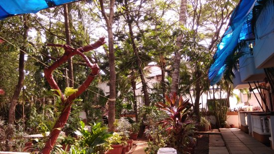 Tropicano Beach Resort: Garden