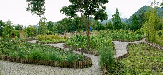 Organic farm - Picture of Six Senses Qing Cheng Mountain, Dujiangyan ...