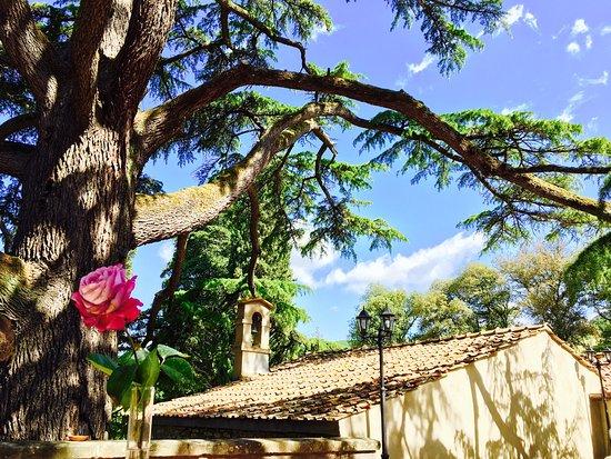 Vicchio, Italia: photo3.jpg