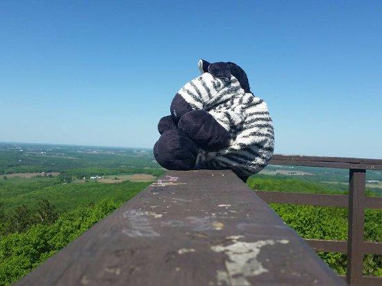 Wausau, WI: Great views! (being enjoyed by Big Butt - instagram @thetravelingzebra)