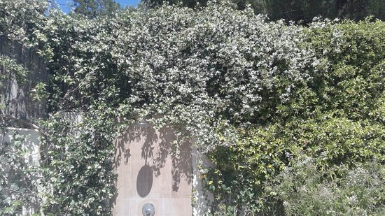 Viganj, Croatia: Brazilian Jasmin smells so good