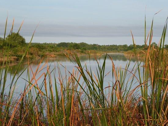 Astatula, FL: Beautiful canal