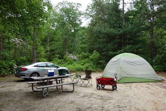 Woodbine, NJ: Campsite #27 at the North Shore campground is spacious and surrounded by blooming mountain laure