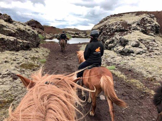 Viking Horses: Beautiful landscape