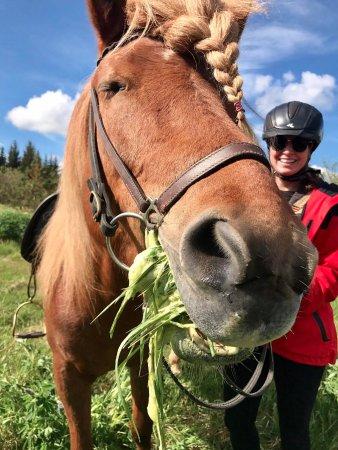 Viking Horses: Summer in Iceland :)