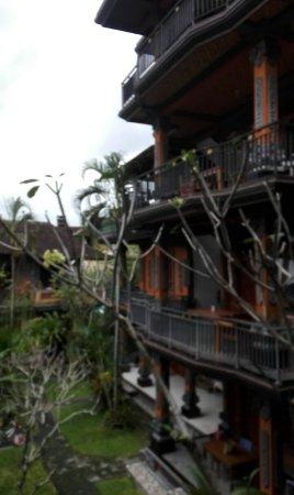 Sayong House : orca-image-1496891559210_large.jpg