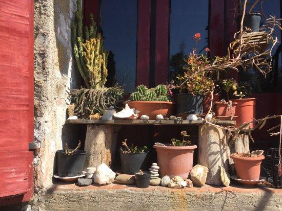 Pari, Italy: Le nostre piante grasse