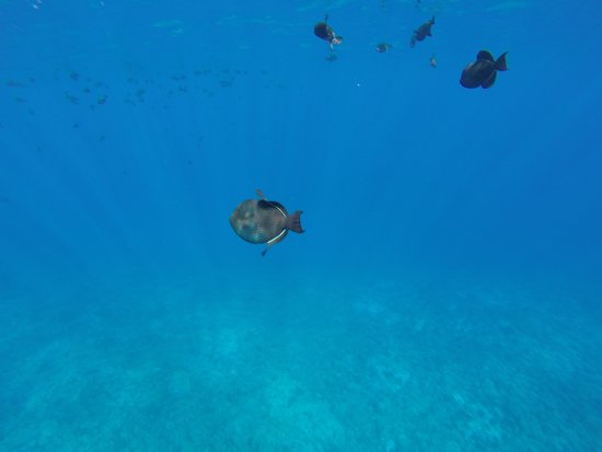 Snorkelling with Redline Rafting Co.