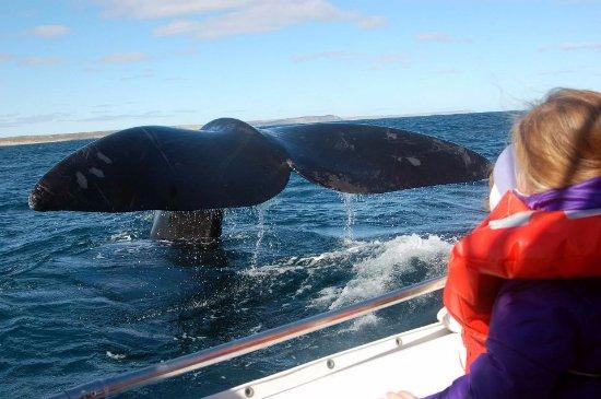 Sentir Patagonia Travel