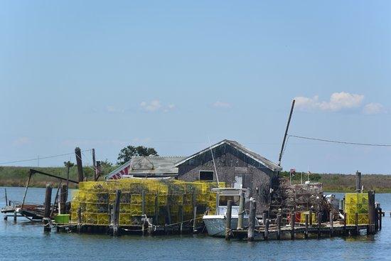Reedville, VA: Watermen serious about Blue Crabs Tangier