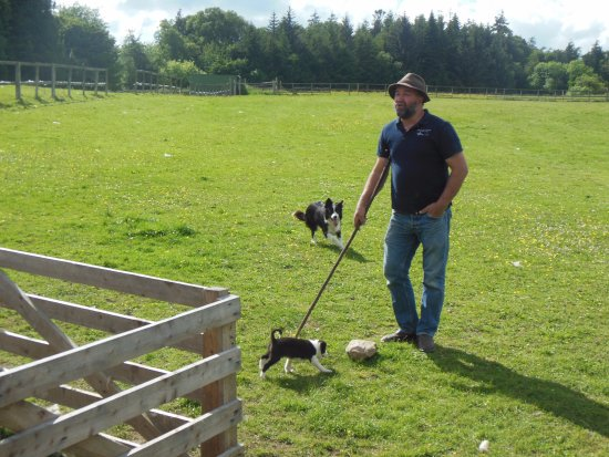 Annamoe, Irland: Michael, Dell and the pup. Dell is ready to work and bring in some sheep!