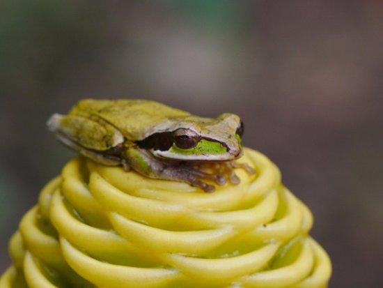 Frogs Heaven: frog-5