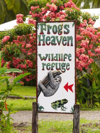 Frogs Heaven: the sign