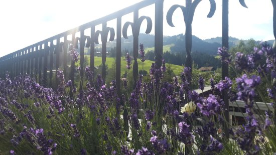 Romantik Hotel Hornberg: The gorgeous view from the first floor sit out
