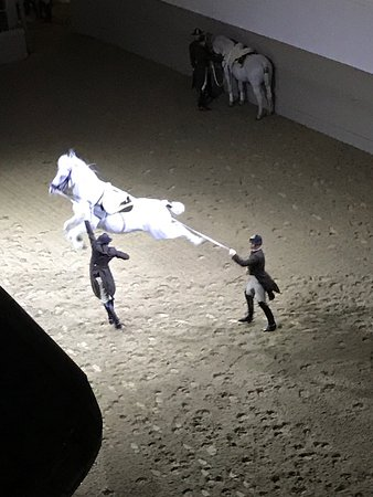 Spanish Riding School : photo2.jpg