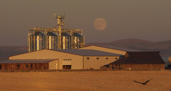 Madras, OR: Mecca Grade Estate malthouse with moonrise and hawk in foreground