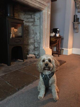 Brilliant stay, pooch friendly