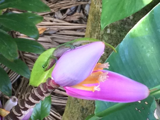 Keaau, Hawái: photo1.jpg