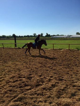 The Thoroughbred Center: Track workout