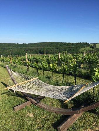 Klentnice, República Checa: Uzasne miesto,krasna lokalita:)vyborne vino Odporucam