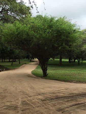 Mala Mala Private Game Reserve, Afrika Selatan: photo0.jpg