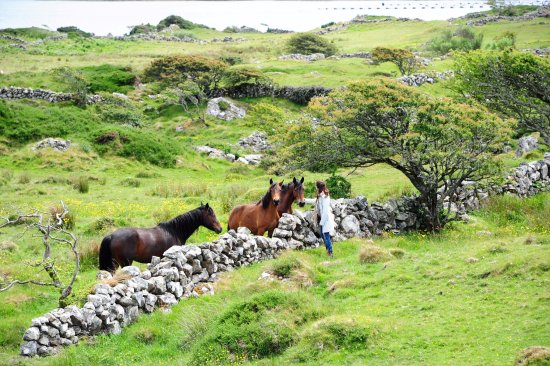 Faul House: Meeting the friendly ponies.